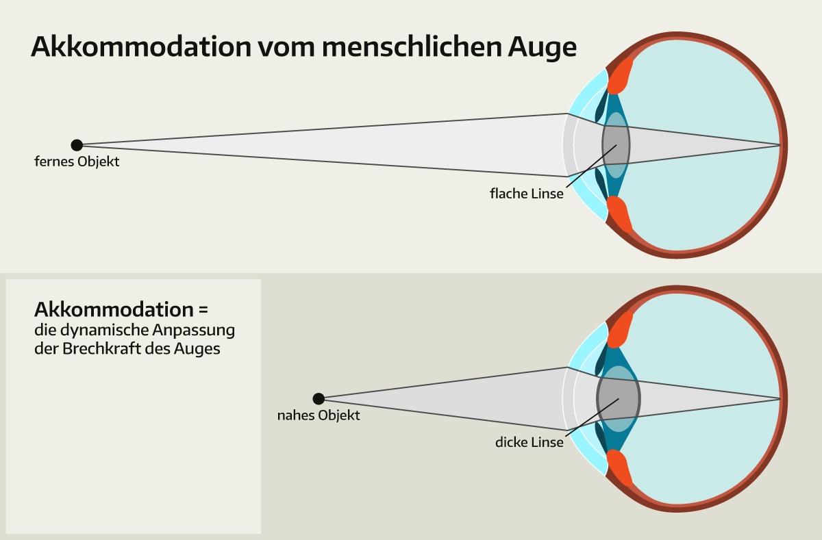Akkommodation: Wenn das Auge scharfstellt