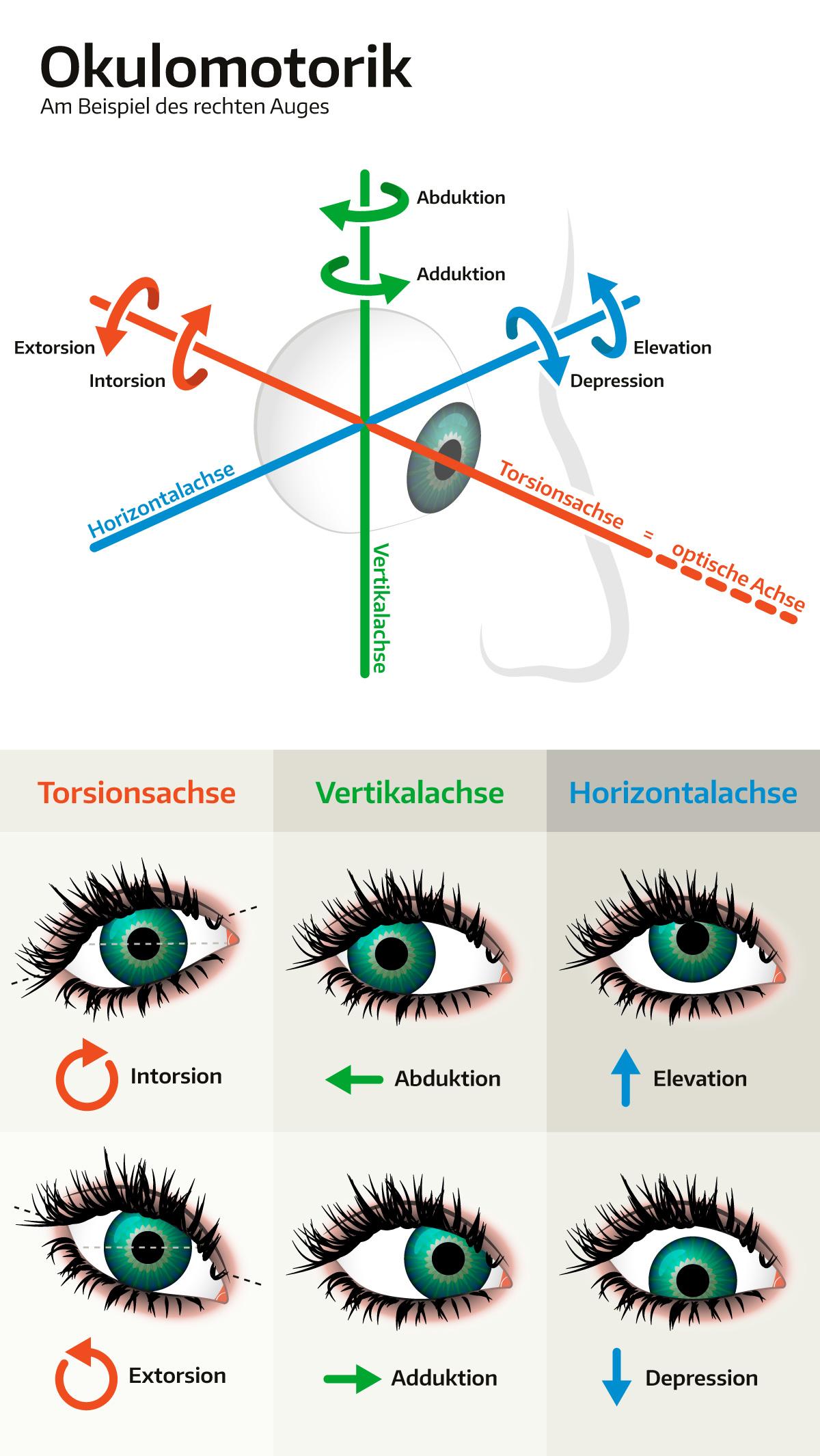 Okulomotorik (Augenbewegung)